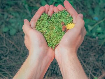 image of hands holding greenery